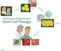 Stem Cells and Society, charting a course for the future
