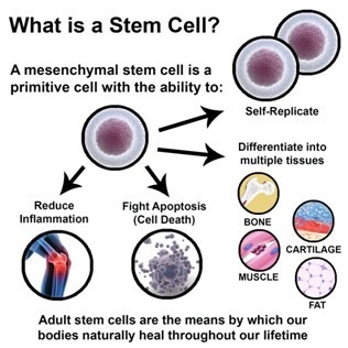 Stem Cell Therapy For Regenerative Medicine
