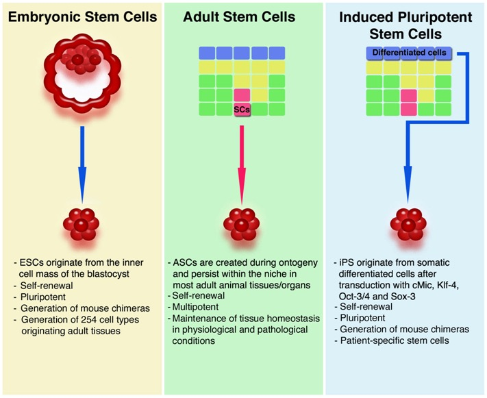 Adult vs embryonic stem cell